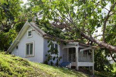 Emergency roof repair needed for a Enumclaw, WA, home after tree fell on roof